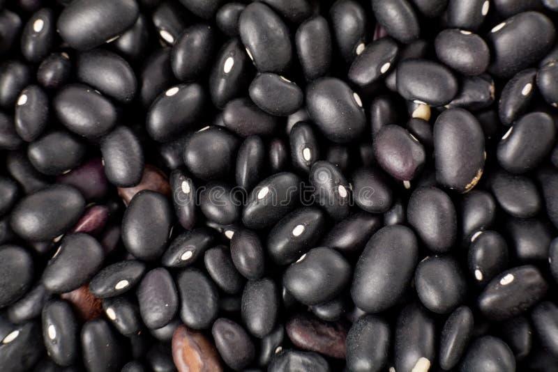 чернота фасолей стоковая фотография