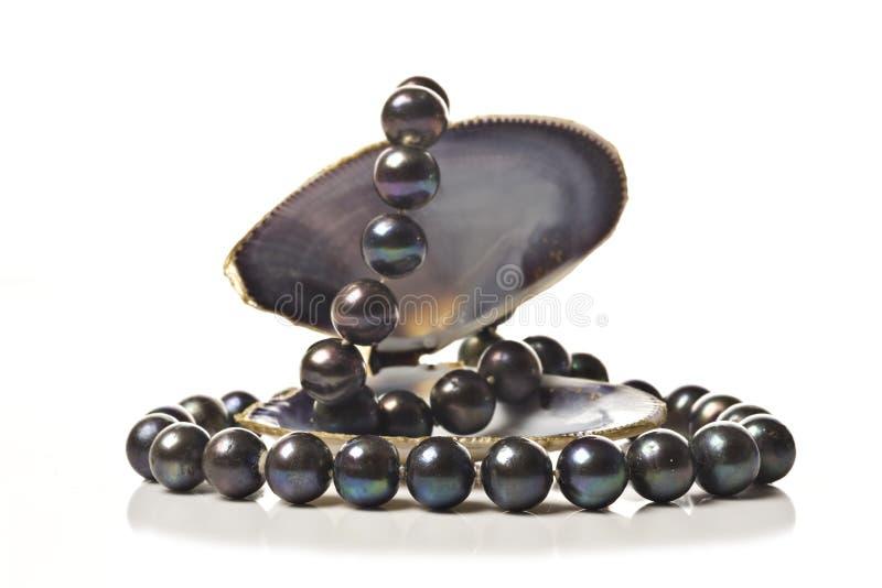 чернота pearls шнур раковины моря стоковая фотография rf