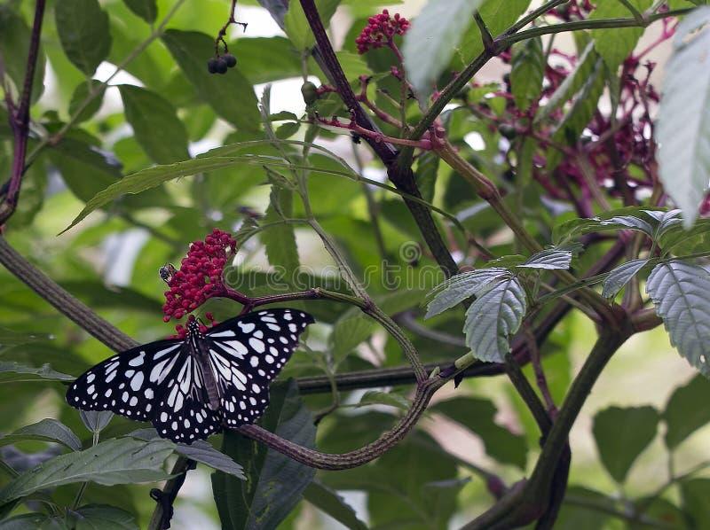 Черно-белая бабочка в парке fai ситовины Suan Бангкока стоковое фото