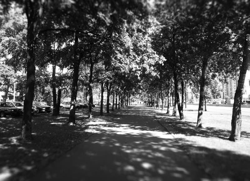 Черно-белая предпосылка переулка парка города стоковая фотография rf