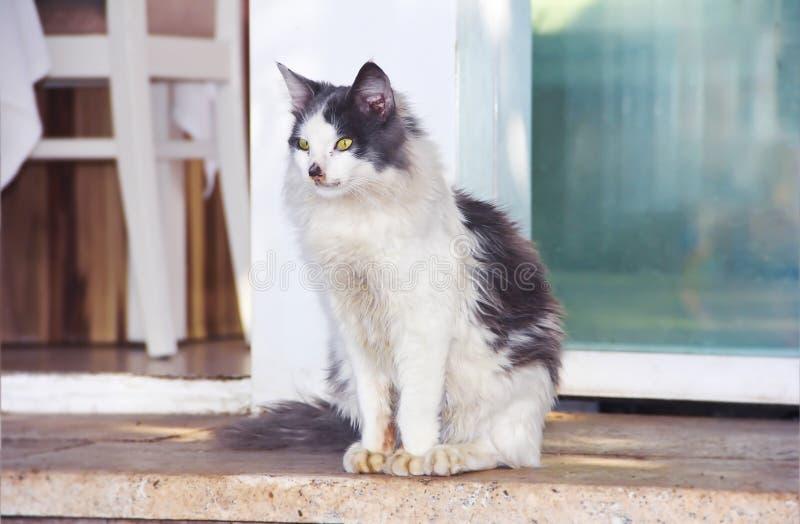Черно-белая пушистая грязная улица усаживание кота стоковые фото