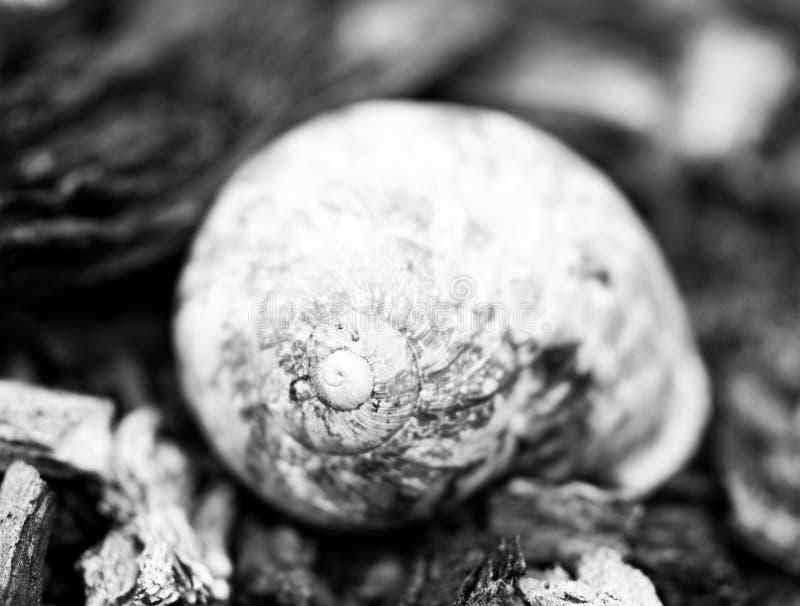 Черно-белая раковина улитки стоковое изображение rf