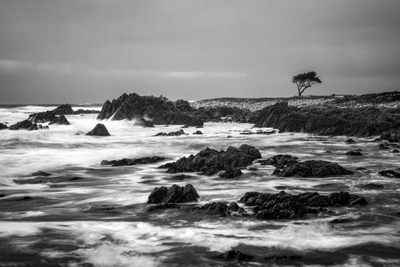Черно-белое драматическое движение океана на скалистом береге с одиночным кипарисом на горизонте стоковые фото