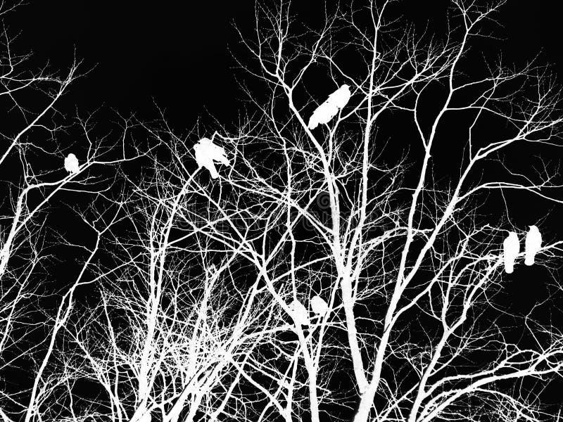 Черно-белое перевернутое готическое изображение ужаса ворон на дереве иллюстрация штока