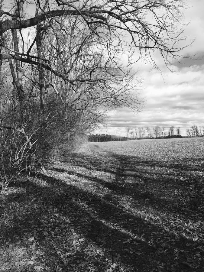 Черно-белое поле стоковые фото