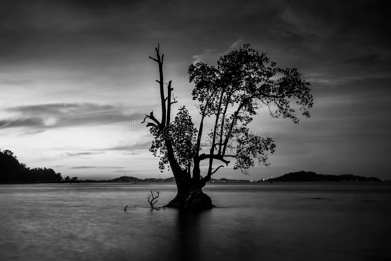 Черно-белые фото на островах Batam Bintan стоковое фото rf