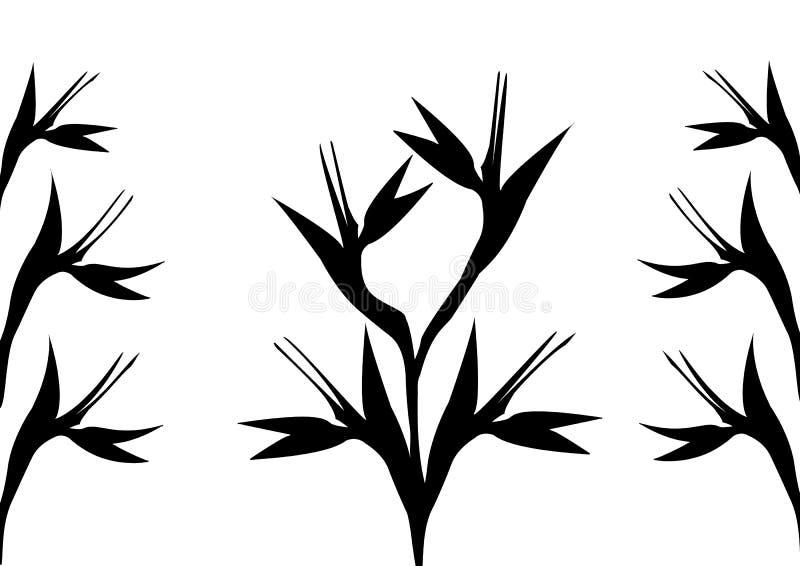 Черно-белые цветки райской птицы бесплатная иллюстрация