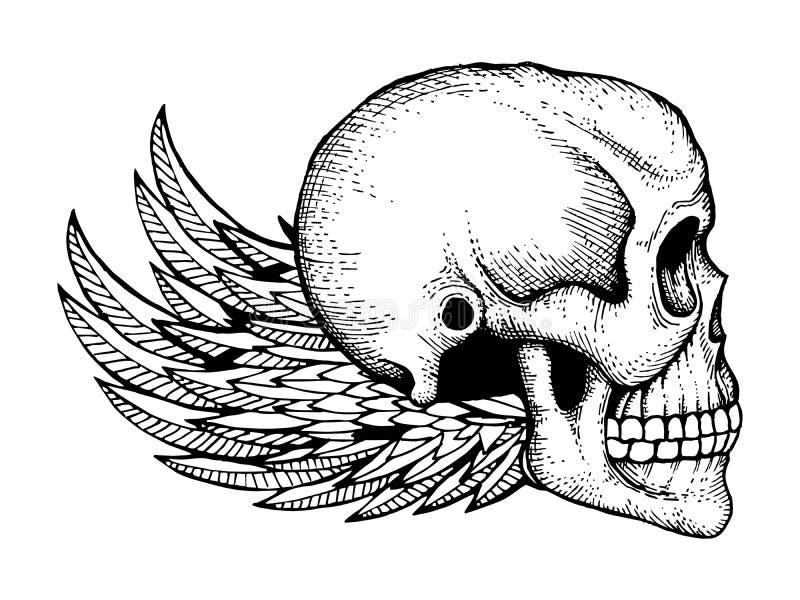 Черно-белые чернила сделали эскиз к человеческому черепу с изолированными крыльями на белой предпосылке бесплатная иллюстрация