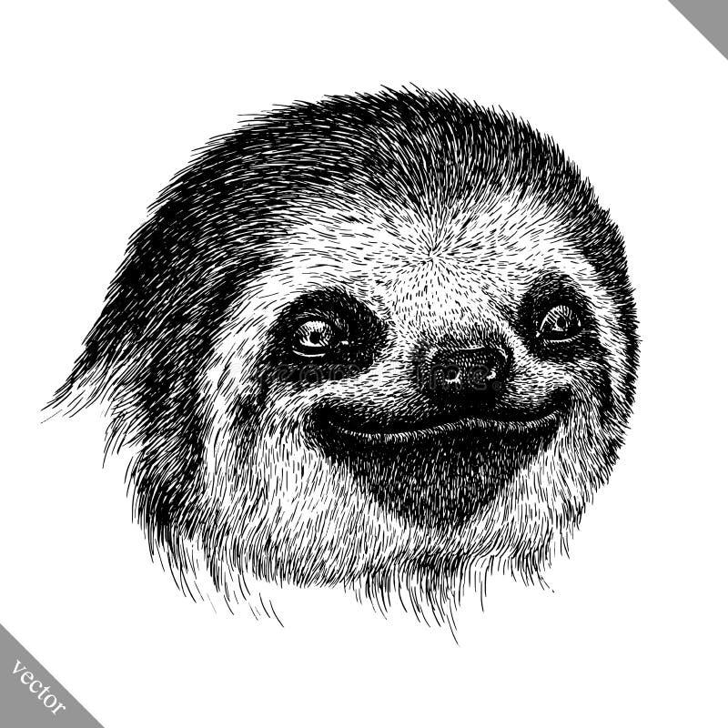 Черно-белый выгравируйте изолированную иллюстрацию вектора лени бесплатная иллюстрация
