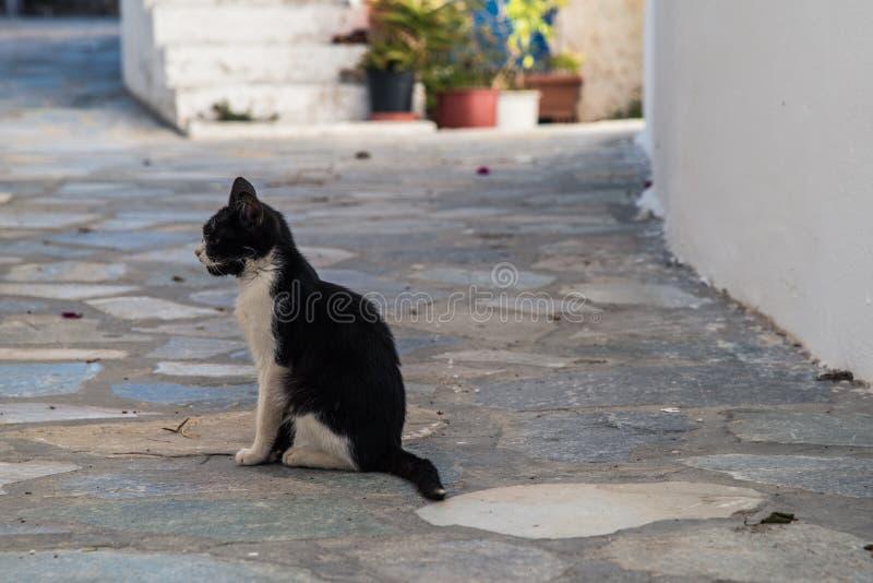 Черно-белый грязный котенок в середине улицы стоковое фото rf