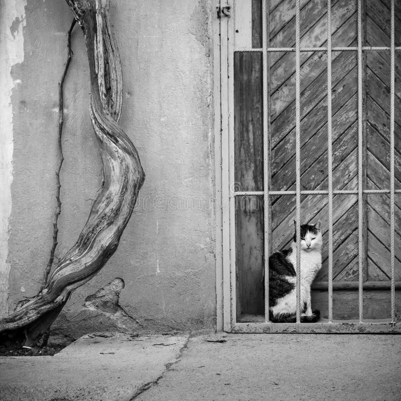 Черно-белый кот стоковое изображение