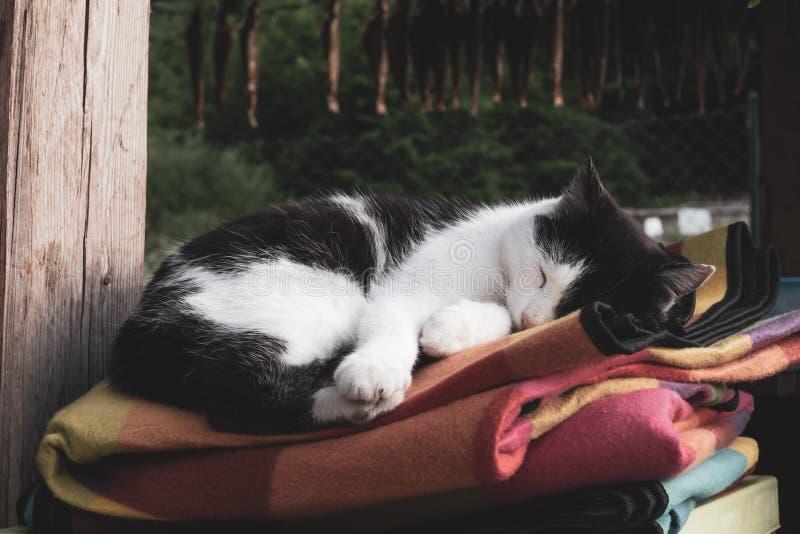 Черно-белый кот спать outdoors на красочных одеялах, концепции домашнего тепла и уюте стоковые изображения rf