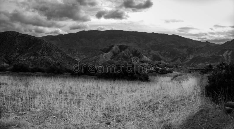 Черно-белый луг стоковая фотография