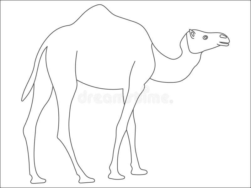 Черно-белый милый верблюд мультфильма Книжка-раскраска для детей иллюстрация штока