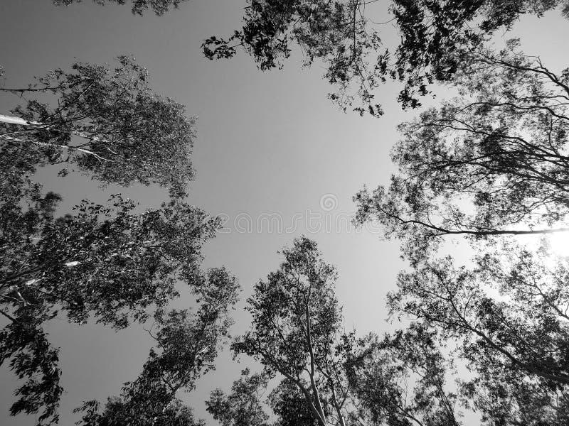 Черно-белый пейзаж стоковая фотография