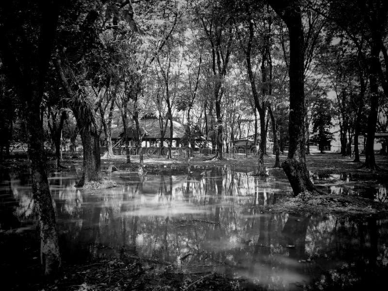 Черно-белый пейзаж стоковые фото