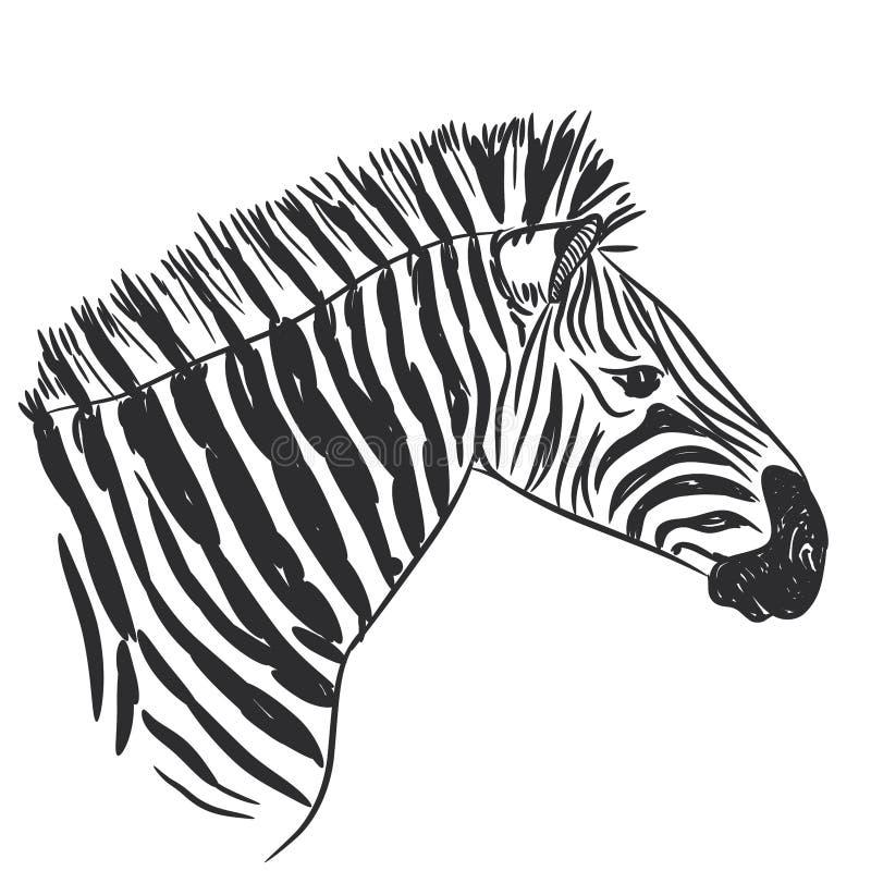 Черно-белый портрет зебры, головной эскиз изолированный на белой предпосылке вектор иллюстрация вектора