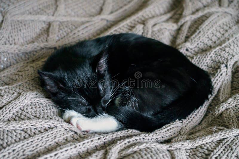 Черно-белый сонный кот отдыхая на ходе кровати стоковое фото