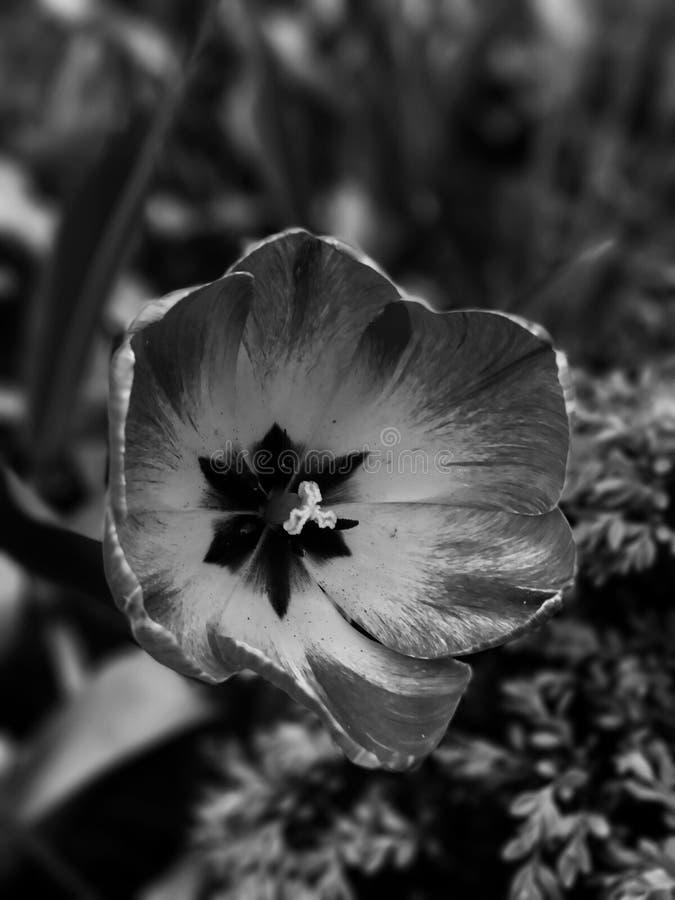 Черно-белая весна стоковые фотографии rf