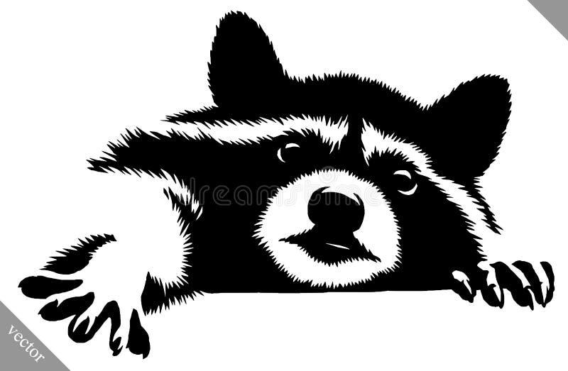 Черно-белая линейная иллюстрация вектора енота притяжки краски иллюстрация штока