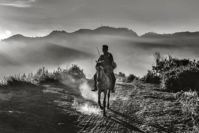 Черно-белое изображение наездника ехать лошадь в вечере стоковое изображение rf