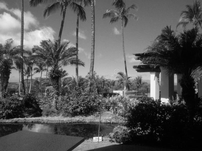 Черно-белые пальмы на поле для гольфа стоковые изображения