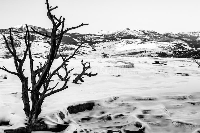 Черно-белый ландшафт зимы Йеллоустона стоковое фото