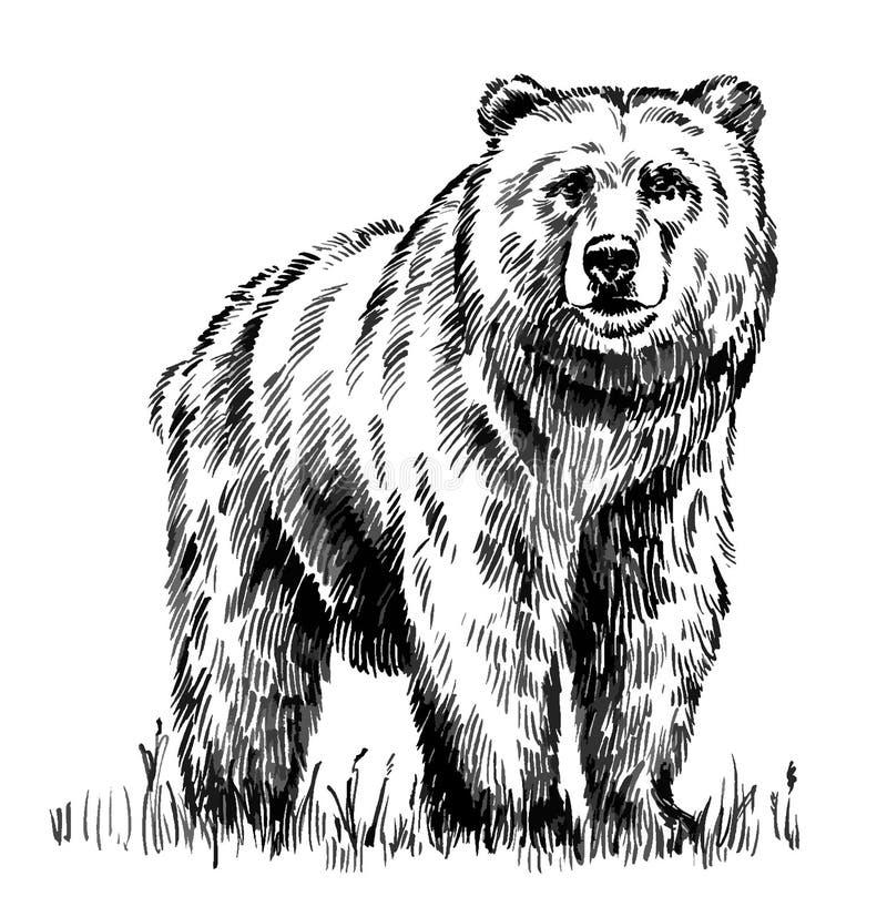 Черно-белый выгравируйте изолированный медведя вектора иллюстрация штока