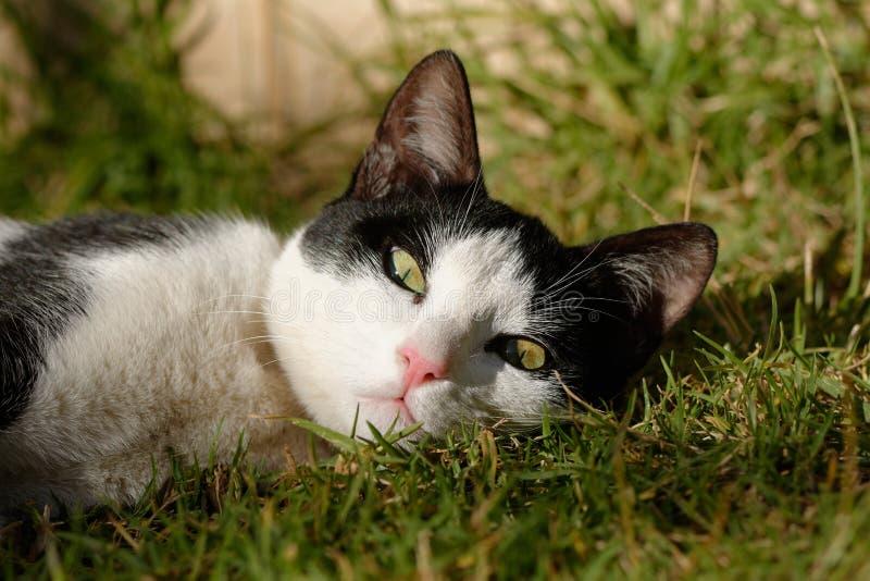 Черно-белый котенок стоковые изображения