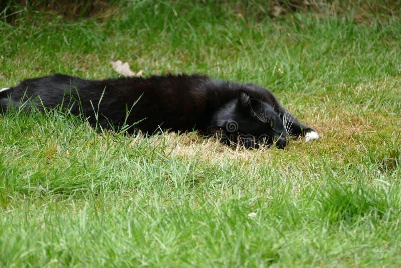 Черно-белый кот в траве стоковое фото