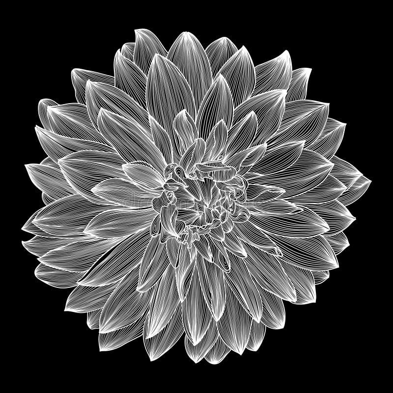 Черно-белый чертеж цветка георгина иллюстрация штока