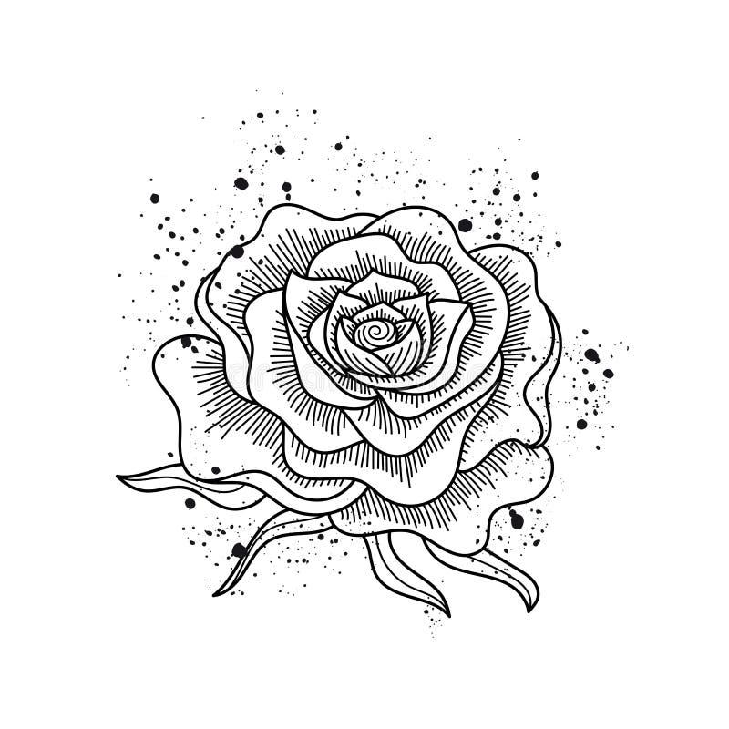 Черно-белым розовым вектор изолированный цветком иллюстрация штока