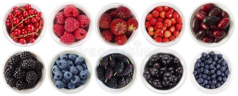 Черно-голубые и красные ягоды изолированные на белой предпосылке Коллаж различных плодоовощей и ягод Голубика, ежевика, шелковица стоковое фото rf