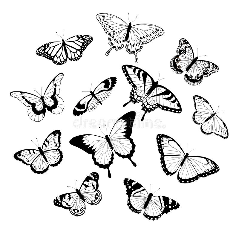 черные бабочки белые бесплатная иллюстрация