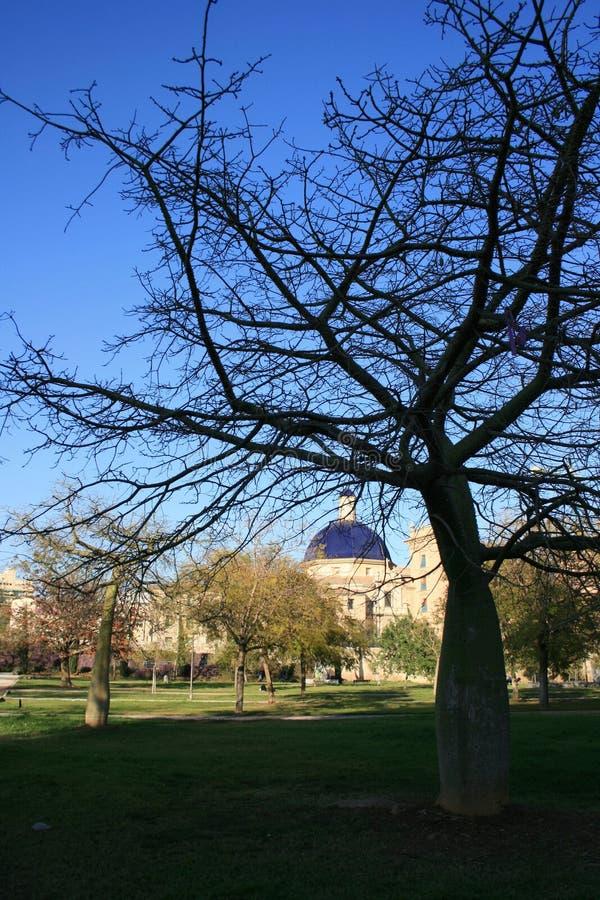 Черные ветви дерева на голубой предпосылке неба весны, Валенсии Испании стоковые изображения rf