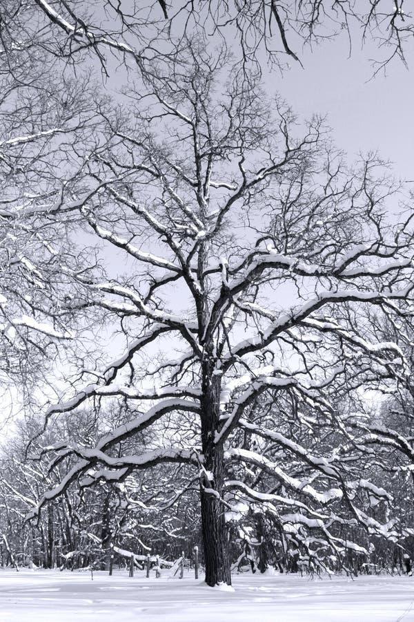 черные древесины белизны вала стоковые фото