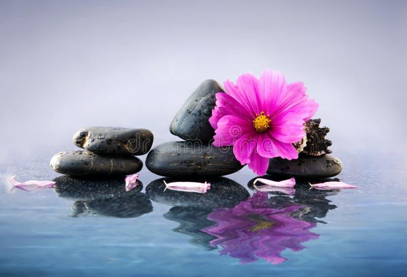 Черные камни курорта и розовый космос цветут с отражением в воде стоковое изображение