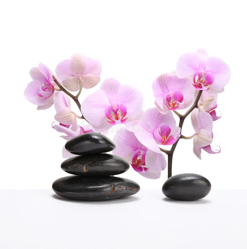 черные камни пинка орхидеи стоковое изображение rf
