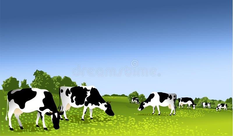 черные коровы будут фермером белизна waltshire Великобритании иллюстрация вектора
