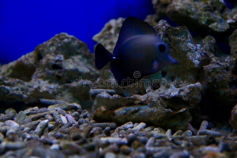 черные рыбы стоковая фотография