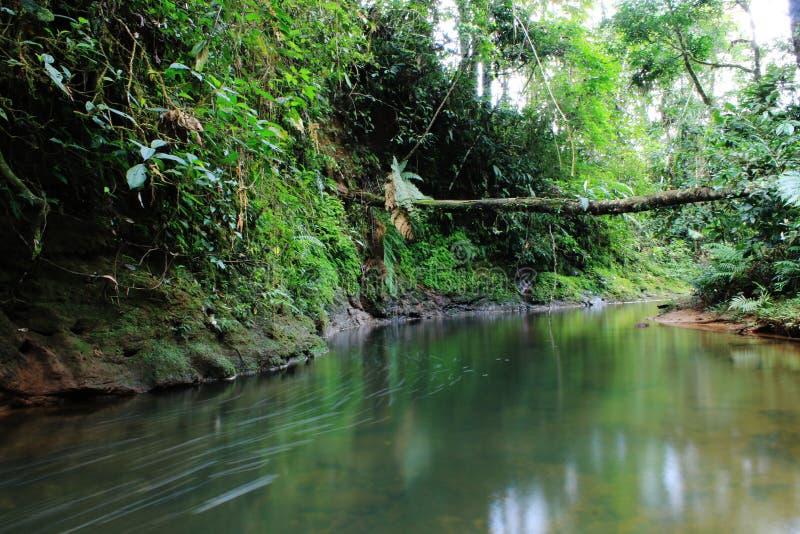 Черные тропические река или поток с сочным зеленым vegation и большим упад стоковое фото