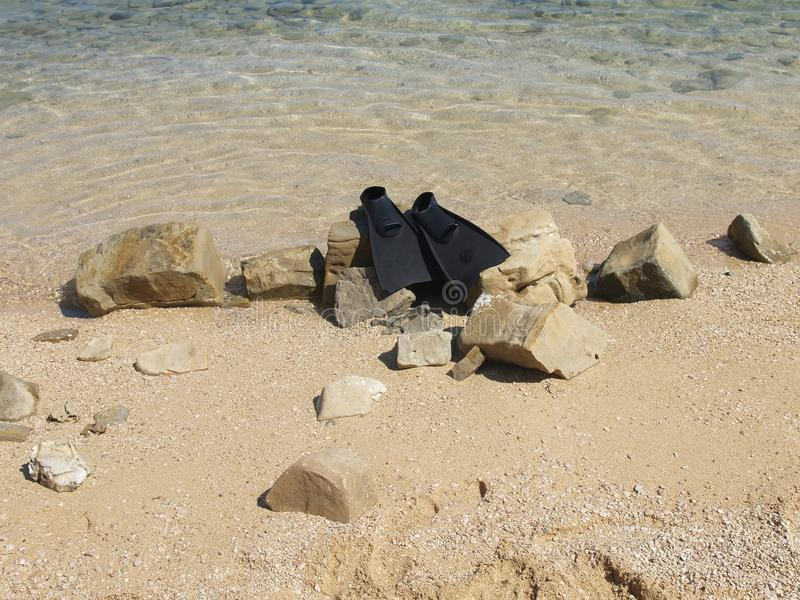 Черные флипперы на пляже стоковое фото rf
