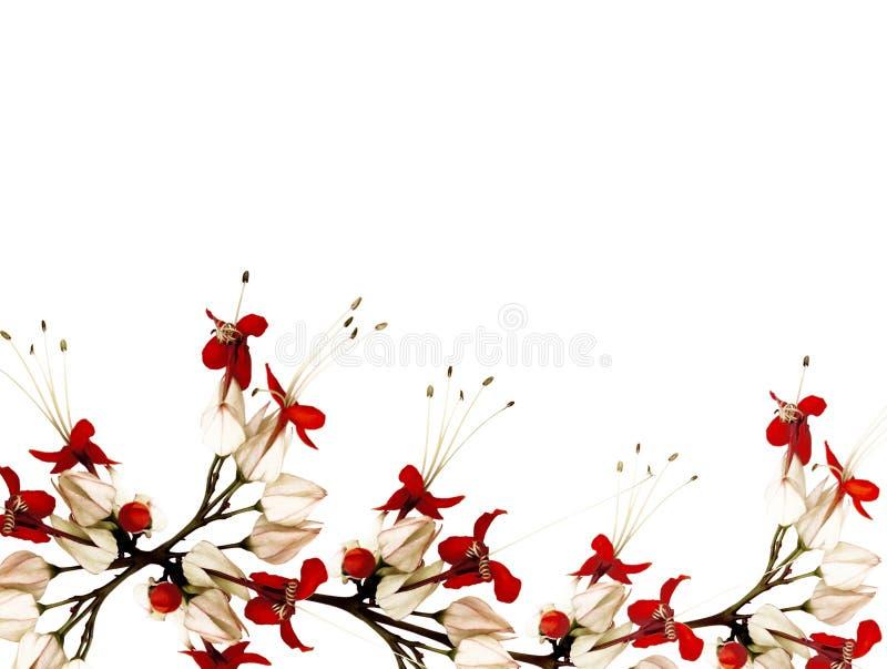 черные цветки бабочки красные стоковые фотографии rf