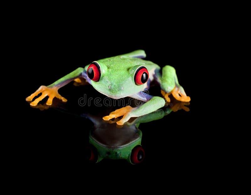 черный вал лягушки стоковая фотография rf