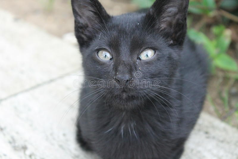 Черный голубоглазый кот стоковое изображение