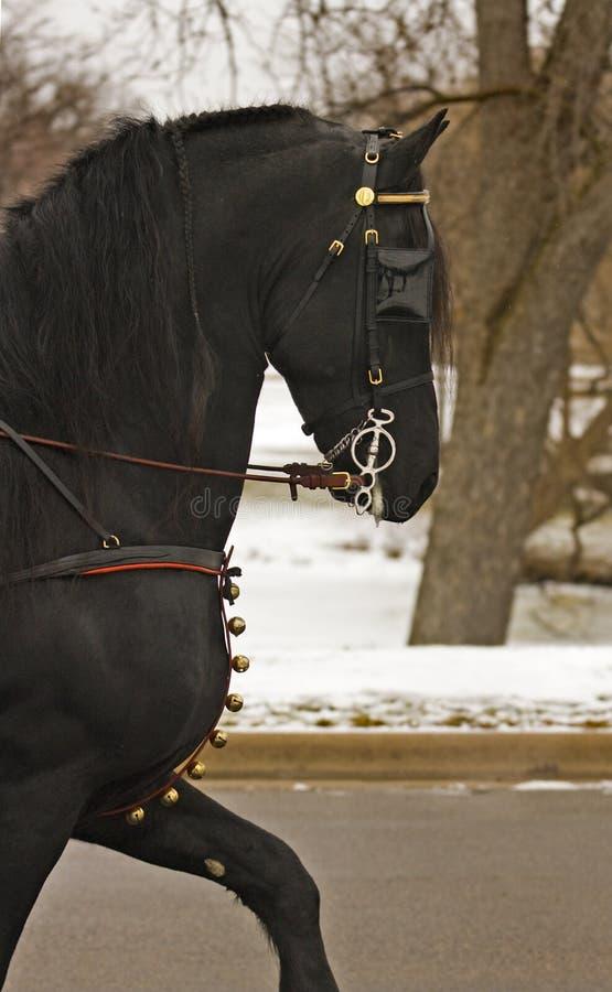 Download черный жеребец портрета стоковое изображение. изображение насчитывающей ранчо - 485709