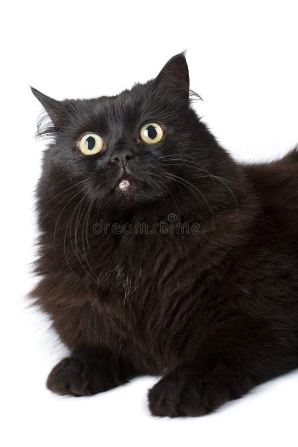 черный изолированный кот стоковое фото