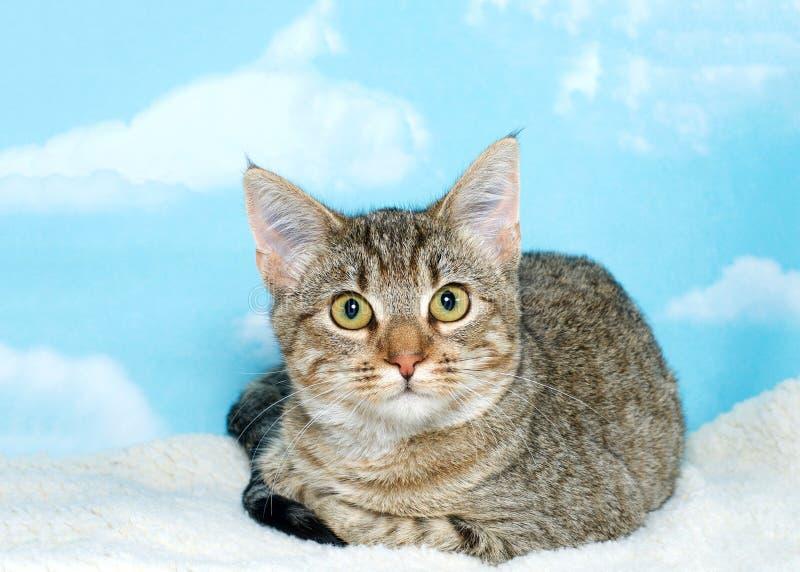 Черный и коричневый котенок tabby на одеяле ватки стоковое изображение