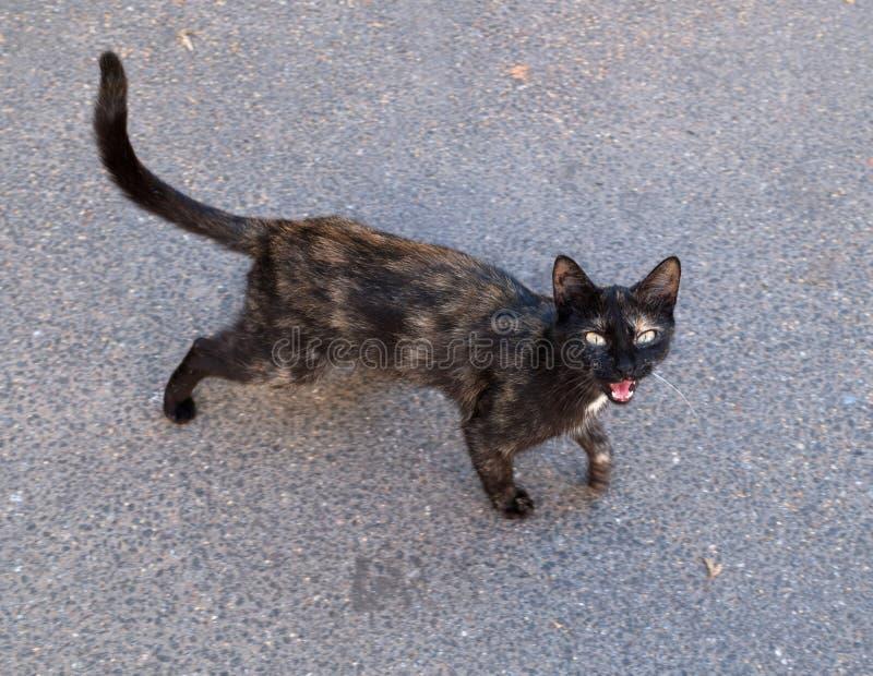 Черный и красный рассеянный кот стоит на асфальте стоковое фото