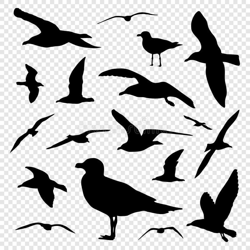 Черный комплект силуэта чайки на прозрачном векторе предпосылки иллюстрация штока